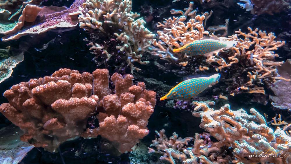新加坡聖淘沙,新加坡海洋館,S.E.A. Aquarium,新加坡海生館,新加坡好玩