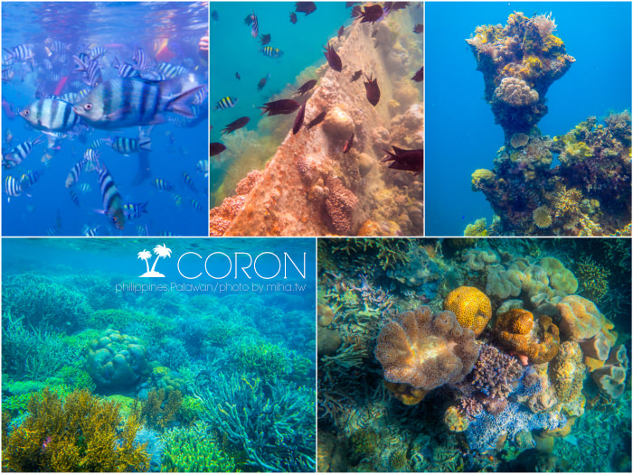 菲律賓科隆島,巴拉望科隆島,巴拉望潛水,科隆島潛水,科隆島行程,科隆島自由行,科隆島旅行社,科隆島好玩,科隆島浮潛
