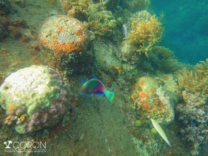 科隆自由行,巴拉望科隆島,coron,科隆島沉船,科隆島浮潛,科隆島潛水