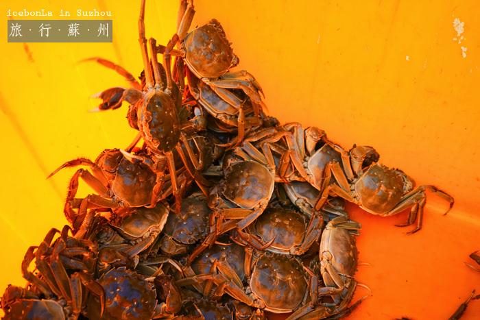 蘇州自由行,蘇州景點,蘇州好玩,蘇州陽澄湖,陽澄湖大閘蟹,蘇州秋蟹,蘇州好吃,