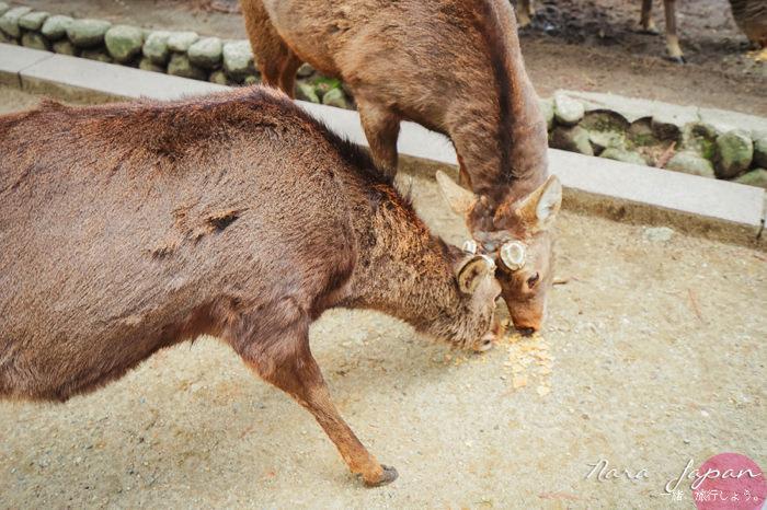 """""""奈良,奈良小鹿,奈良一日遊,奈良交通票,奈良地圖,奈良攻略,/"""