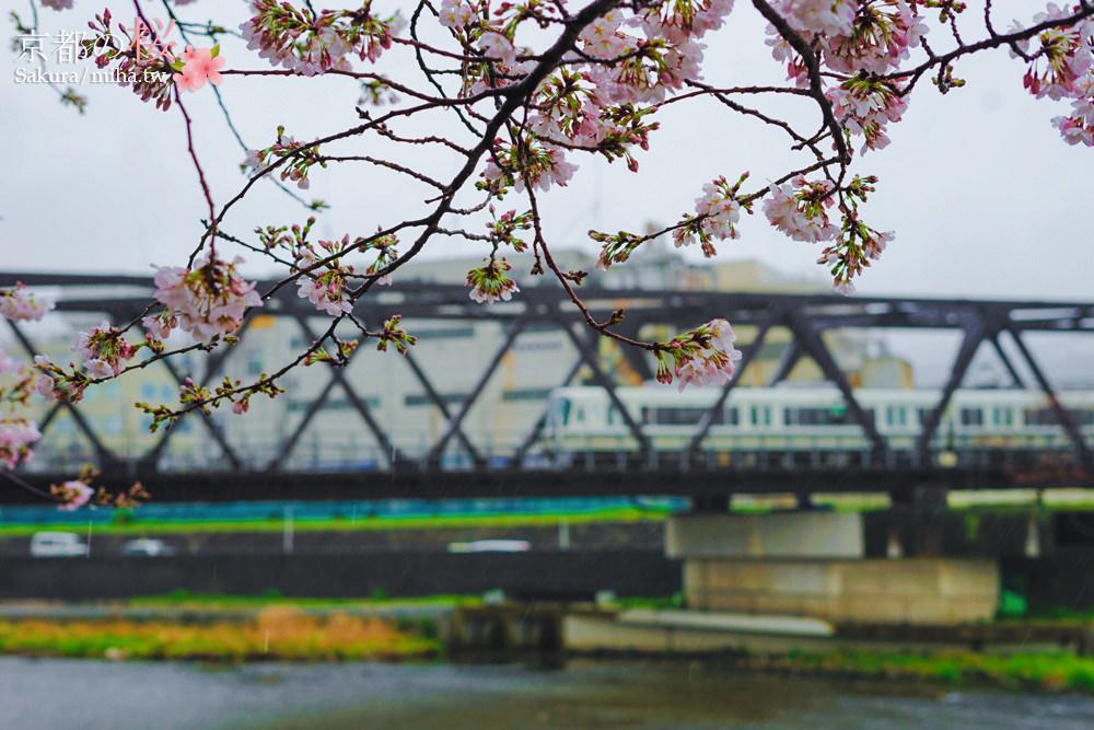 京都賞櫻,京都景點,京都自由行,京都飯店推薦,京都鴨川,京都櫻花走廊