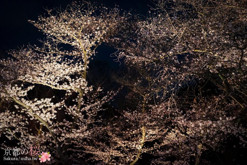京都賞櫻,京都自由行,京都景點,二条城夜櫻,京都櫻花,京都賞櫻行程,京都飯店推薦
