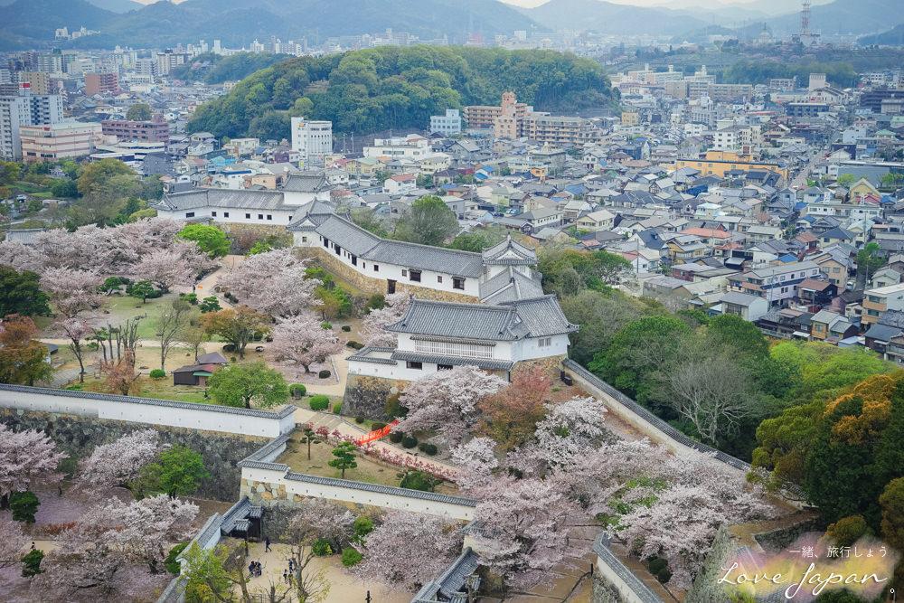 姬路城,日本城堡,日本三大名城,兵庫縣自由行,賞櫻景點