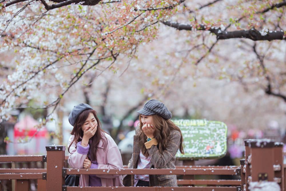 釜山自由行,釜山賞櫻,韓國櫻花,釜山櫻花,釜山景點,釜山好玩,釜山鎮海櫻花,鎮海賞櫻