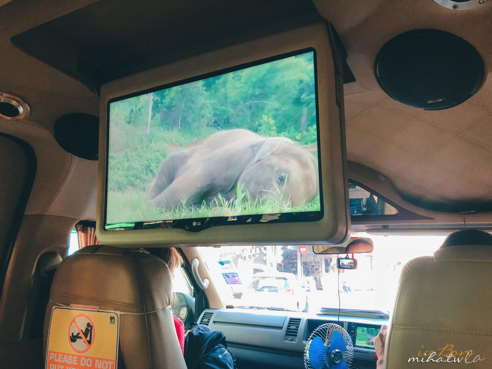清邁自由行,清邁,清邁景點,清邁大象,大象自然公園,Elephant Nature Park