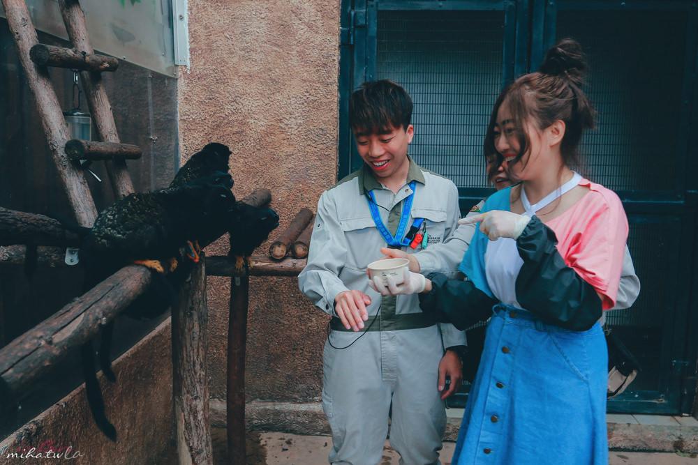 香港自由行,香港海洋公園,香港景點,香港好玩,香港飯店推薦,香港海洋公園與動物親上加親