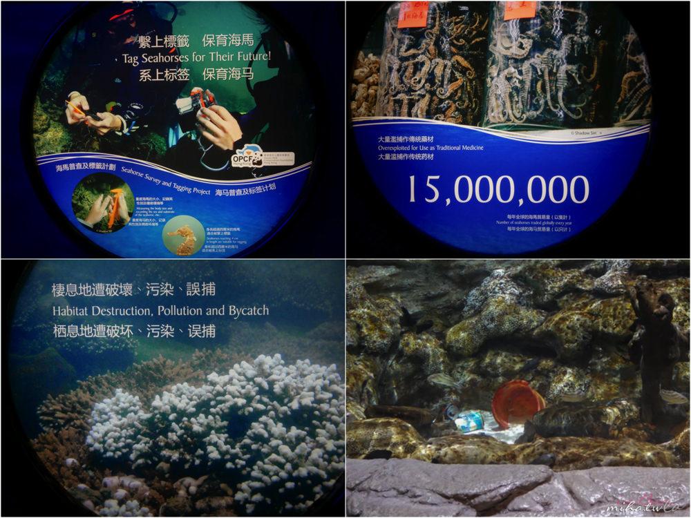 香港自由行,香港海洋公園,香港景點,香港好玩,